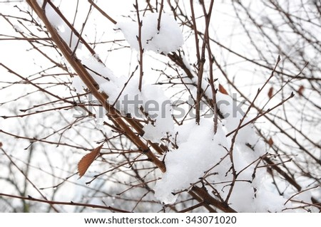Branches covered in snow - stock photo