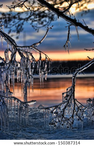 Branches covered with beautiful icicles - stock photo