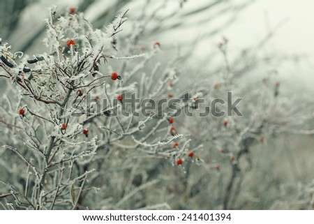 branches covered with snow winter snowfall background - stock photo