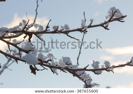 Branches covered with snow with glitter in the sun