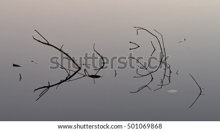 Branches in lake early morning