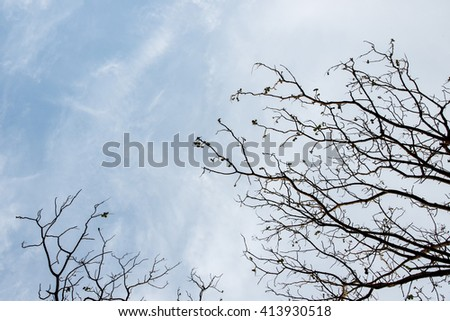 Branches of a tree and blue sky background, copy space