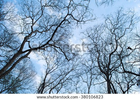 Branches of a tree without leaves in spring on blue sky