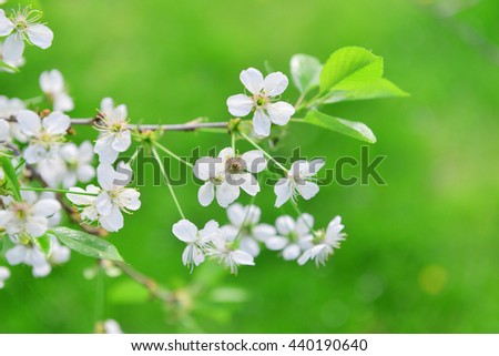 branches of blossoming tree in garden - stock photo