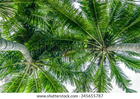 branches of coconut palms under blue sky