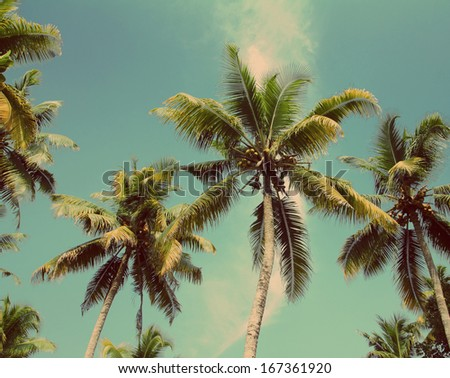 branches of coconut palms under blue sky - vintage retro style - stock photo