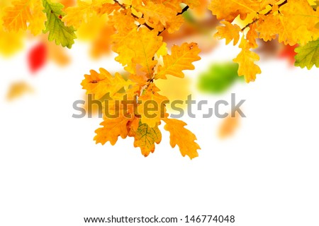 Branches of colorful autumn oak leaves - stock photo