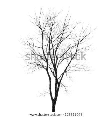 Branches of dead tree - stock photo