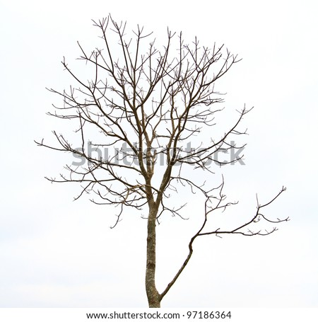 Branches of dead tree in thailand - stock photo