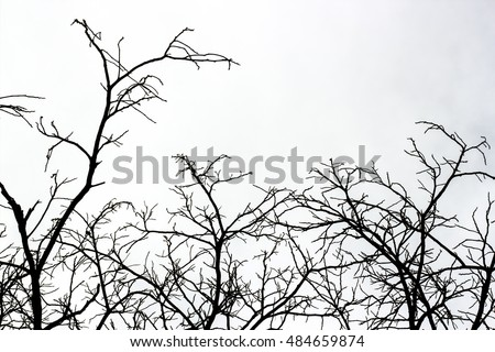 Branches of dead trees on a white background.