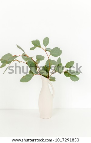Branches Eucalyptus Populus Vase On Table Stock Photo Download Now