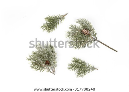 Branches of fir tree - stock photo