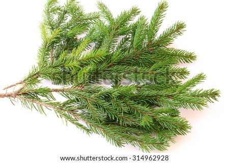 branches of fir tree isolated on white background christmas new year winter - stock photo