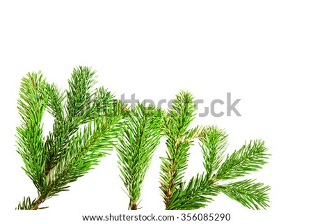 Branches of fir tree isolated on white background with copy space - stock photo