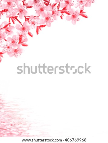 branches of fruit trees isolated on white background