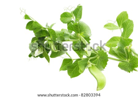 Branches of green pea on white background - stock photo