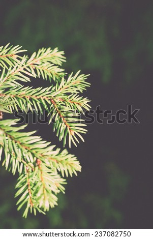 branches of pine tree on blur background - retro, vintage style look