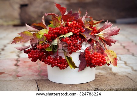 Branches of ripe viburnum berries in white bucket - stock photo