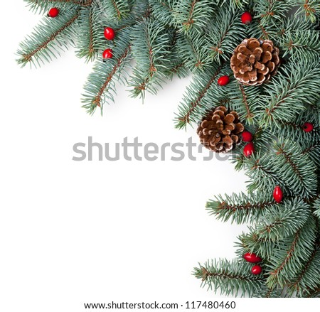 Branches of silver spruce with cones and briar on white background. Copy space - stock photo