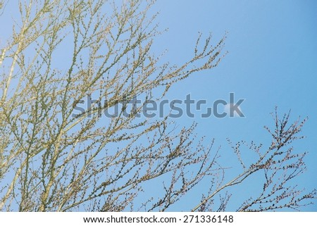 Branches of the tree with the moon in the sky. (Soft Light Process)  - stock photo