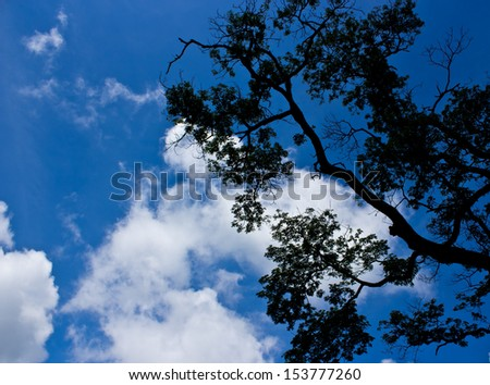 branches of trees against the blue sky with white clouds - stock photo