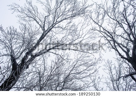 Branches of trees covered by hoarfrost on a background of the blue sky - stock photo