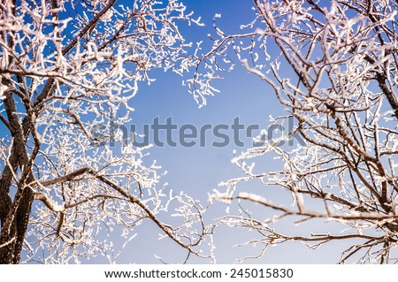 Branches of trees form a heart shape. Beautiful winter landscape. Creative toning effect - stock photo