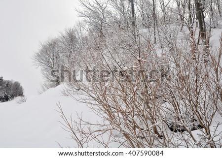 Branches of trees on background snow. - stock photo