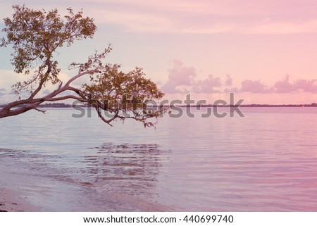 Branches on the beach of Pacific ocean. Paradise. Sunset. Blue sky. yellow sand. Miami. Florida. USA