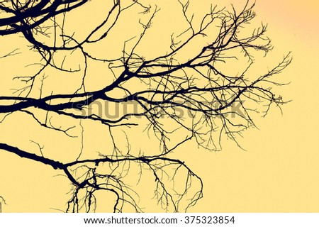 branches silhouette background