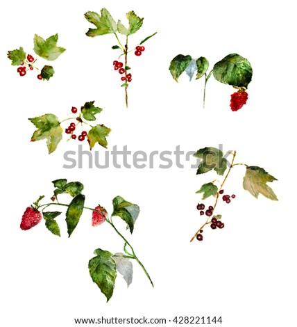 branches with berries: red currant, black currant and raspberry, hand-drawn watercolor - stock photo