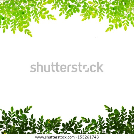 Branches with green leaves. On a white background.