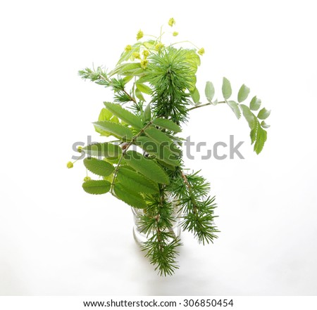 Branches with young leaves larch, maple, mountain ash in a vase on a white background.