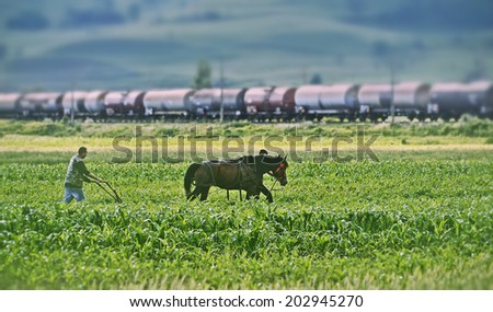 BRASOV - MATEIAS, ROMANIA - JULY 1: An unidentified man with a horse plowing corn field in Mateias Brasov, Romania.  - stock photo