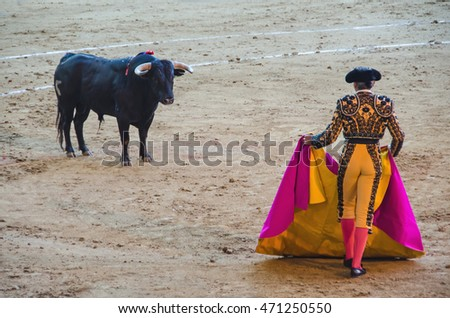 Brave bullfighter in front of the bull and holding the cape. Spanish corrida de toros