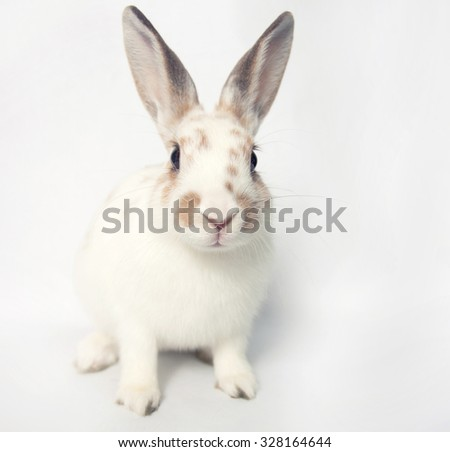 Brave white baby bunny with huge eyes on a white backgroud - stock photo