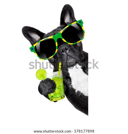 brazil  caipirinha cocktail french bulldog dog enjoying summer vacation holidays, beside blank empty banner or placard, isolated on white background - stock photo