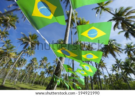 Brazilian flag bunting hanging in grove of tall green coconut palm trees standing in bright blue tropical Brazilian sky Nordeste Brasil - stock photo