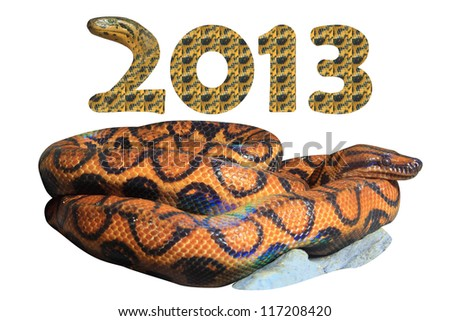 Brazilian Rainbow Boa (Epicrates cenchia) with concept 2013 Year of the Snake. (include Clipping Paths, ready to use) - stock photo