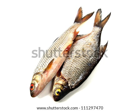 fish and fin bream