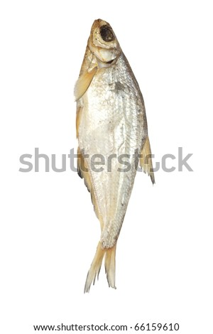 bream isolated on white background