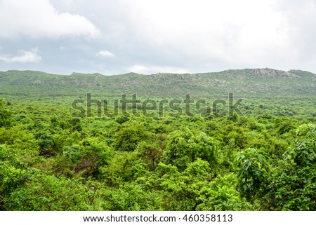 Breathtaking Landscape of Dense Forest in India