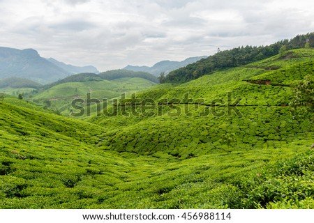 Breathtaking view on the tea plantations in Asia