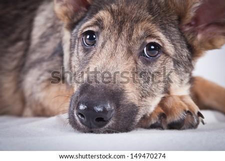 Breed dog - stock photo