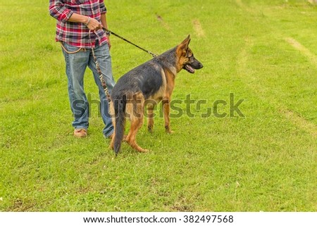 breed of german shepherd on grass floor, dog in the park