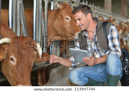 Breeder in cow barn using digital tablet - stock photo