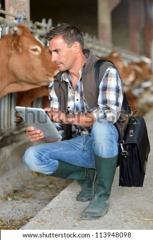 Breeder in cow barn using digital tablet