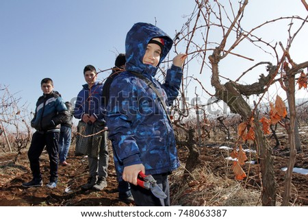 Brestovitsa, Bulgaria - Feb 2, 2007: Boys children performs ritual cuts vineyards during the celebration of St. Trifon's Day day of the grower and wine.
