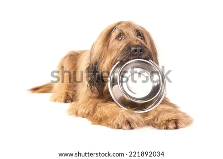 Briard holding a stainless bowl - stock photo
