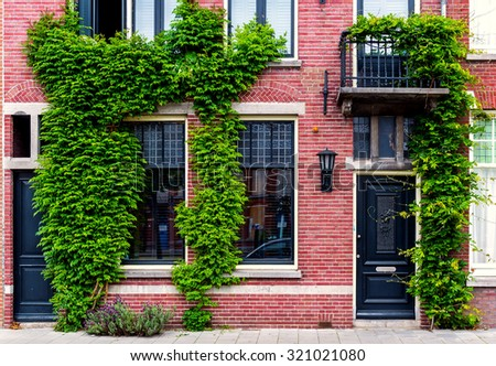 Brick building covered with green ivy. Netherlands. Western Europe - stock photo